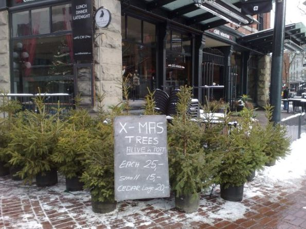 xmas-trees-for-sale