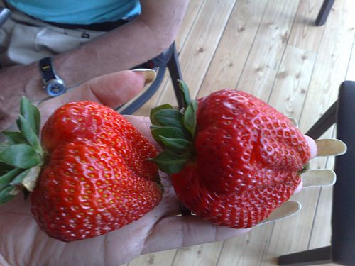 Big strawberry 4