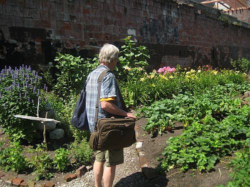 Hastings Street Garden 1