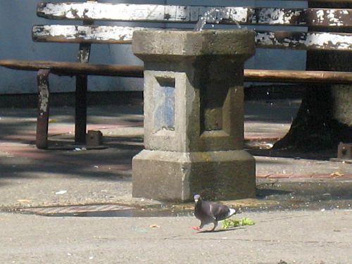 Pigeon Park 1