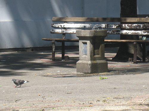 Pigeon Park 10
