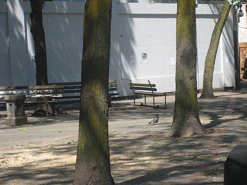 Pigeon Park 6