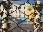 288 AHA MEDIA films W2 Soul Garden Mural in Vancouver Downtown Eastside (DTES)