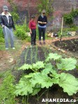 15 AHA MEDIA sees Hastings Folk Garden in Vancouver Downtown Eastside (DTES)