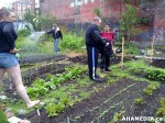 16 AHA MEDIA sees Hastings Folk Garden in Vancouver Downtown Eastside(DTES)