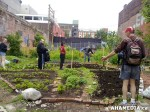17 AHA MEDIA sees Hastings Folk Garden in Vancouver Downtown Eastside (DTES)