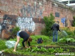 21 AHA MEDIA sees Hastings Folk Garden in Vancouver Downtown Eastside (DTES)