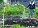23 AHA MEDIA sees Hastings Folk Garden in Vancouver Downtown Eastside (DTES)