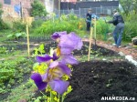 25 AHA MEDIA sees Hastings Folk Garden in Vancouver Downtown Eastside (DTES)