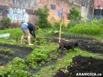 29 AHA MEDIA sees Hastings Folk Garden in Vancouver Downtown Eastside (DTES)