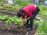 8 AHA MEDIA sees Hastings Folk Garden in Vancouver Downtown Eastside (DTES)