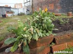 9 AHA MEDIA sees Hastings Folk Garden in Vancouver Downtown Eastside (DTES)