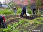 9 AHA MEDIA sees Hastings Folk Garden in Vancouver Downtown Eastside(DTES)
