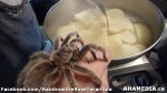 119 AHA MEDIA sees Rainbow the Rose Tarantula in Vancouver