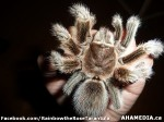 16 AHA MEDIA sees Rainbow the Rose Tarantula in Vancouver