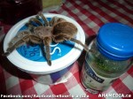 163 AHA MEDIA sees Rainbow the Rose Tarantula in Vancouver