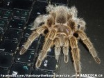 5 AHA MEDIA sees Rainbow the Rose Tarantula in Vancouver