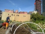 137 AHA MEDIA sees Woodwards Community Garden in Vancouver