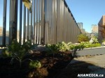 21 AHA MEDIA sees Woodwards Community Garden in Vancouver