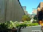 22 AHA MEDIA sees Woodwards Community Garden in Vancouver