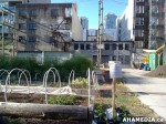 56 AHA MEDIA sees Woodwards Community Garden in Vancouver