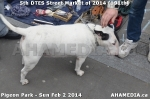 1 AHA MEDIA sees 191st DTES Street Market in Vancouver on Sun Feb 2 2014 (25)