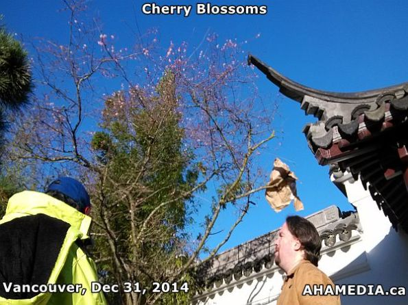 Peter of AHA MEDIA sees Cherry Blossoms in Vancouver on Dec 31, 2014