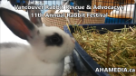 1 AHA MEDIA at 11th Annual Rabbit Festival by Vancouver Rabbit Rescue & Advocacy (13)