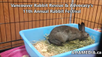 1 AHA MEDIA at 11th Annual Rabbit Festival by Vancouver Rabbit Rescue & Advocacy (14)