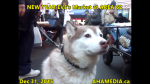 1 AHA MEDIA at New Year Eve's 2015 at DTES Street Market Area 62 in Vancouver on Dec 31 2015 (22)