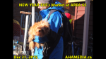 1 AHA MEDIA at New Year Eve's 2015 at DTES Street Market Area 62 in Vancouver on Dec 31 2015 (80)
