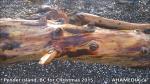 1 AHA MEDIA at Pender Island, BC for Christmas 2015 (19)