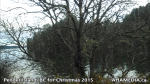 1 AHA MEDIA at Pender Island, BC for Christmas 2015 (27)