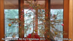 1 AHA MEDIA at Pender Island, BC for Christmas 2015 (3)