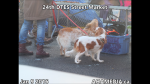 1 AHA MEDIA at 24th DTES Street Market at 501 Powell St in Vancouver on Jan 9 2016 (51)