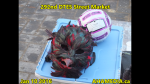 1 AHA MEDIA at 292nd DTES Street Market in Vancouver on Jan 10 2016 (102)