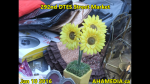 1 AHA MEDIA at 292nd DTES Street Market in Vancouver on Jan 10 2016 (86)